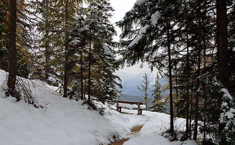 Blick Zum Koenigssee Vom Brandkopf