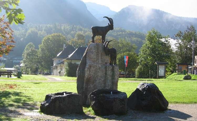 Steinböcke am Königssee