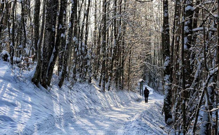 Winterwandern Auf Dem Koenigsseer Fussweg